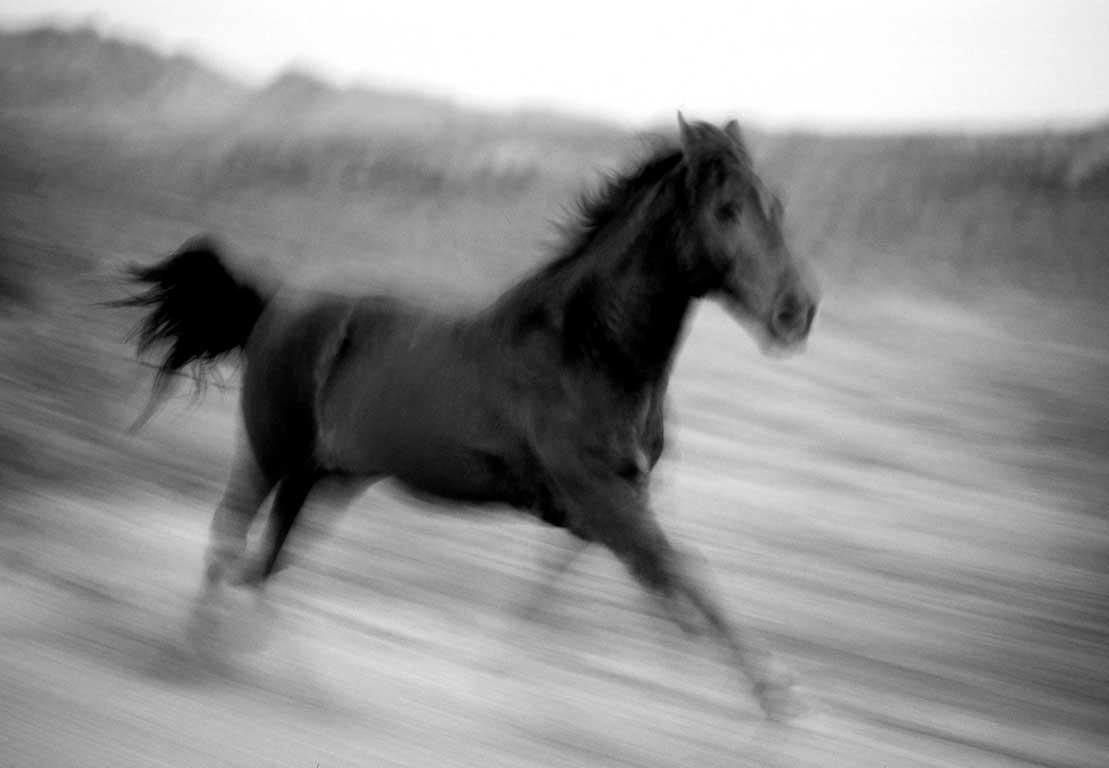 Martina Horse Running, Amado-James O'Mara Photography