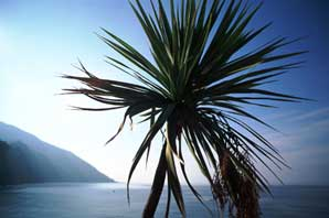Palm-Liguria-James O'Mara