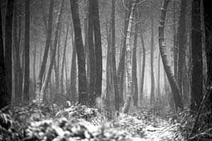 Loire Forest-Normandy-James O'Mara
