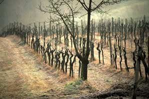 Winter Wines, Tuscany-James O'Mara